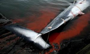 caza-ballenas-japon